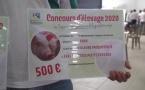 Le concours d'élevage de Bras-Panon