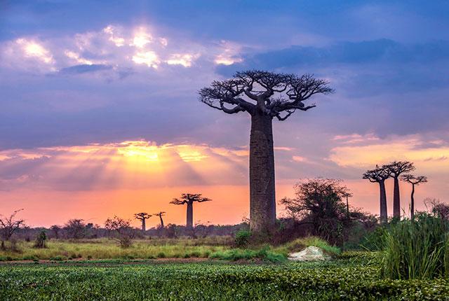 CHANGEMENT CLIMATIQUE :  MADAGASCAR, SI VULNERABLE...