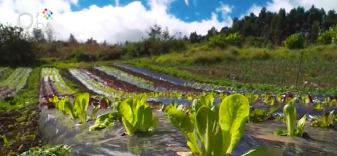 L'agriculture biologique avec Uprobio