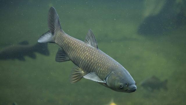 Toujours plus de poisson