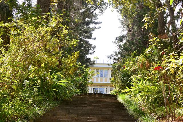 Un arboretum pour l'Etang Saint-Paul