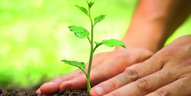 Réduire son empreinte écologique : des gestes simples qui comptent