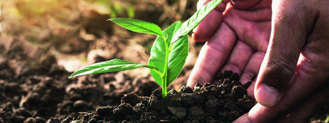 2020, année internationale de la santé des végétaux