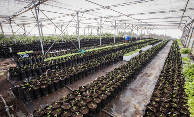 La production végétale locale