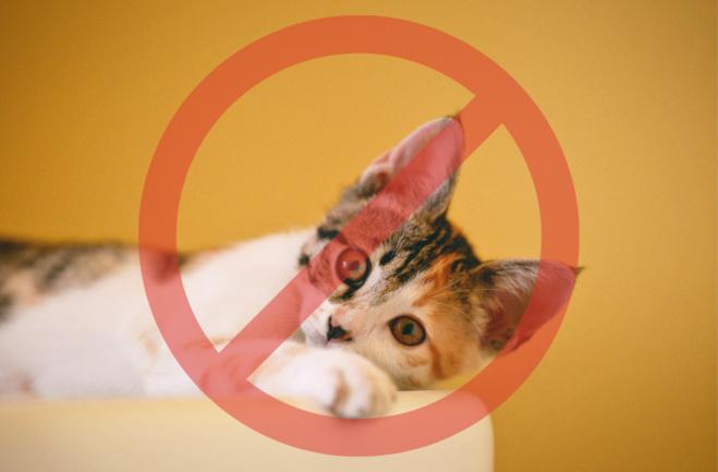Adoption de la loi sur l'interdiction de vente d'animaux en animaleries