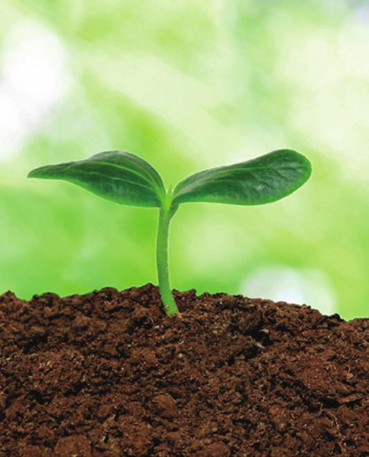 Des plantes qui améliorent le sol !