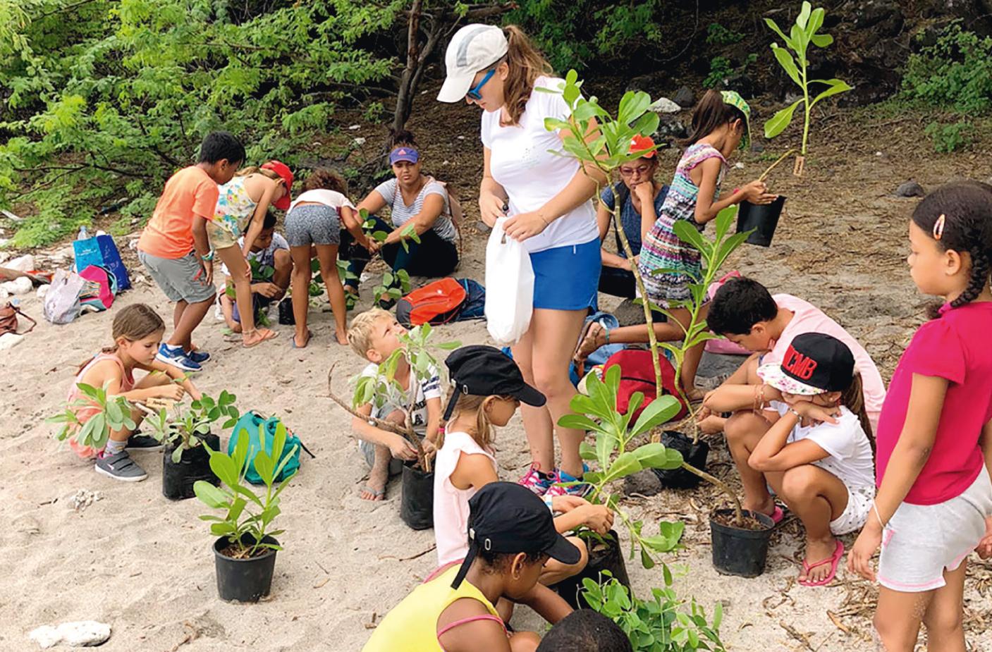 Ateliers de plantation sur les plages de pontes de tortues marines
