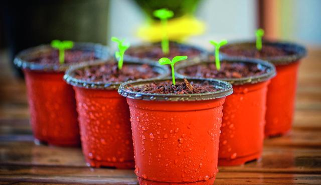 Un guide pour horticulteurs