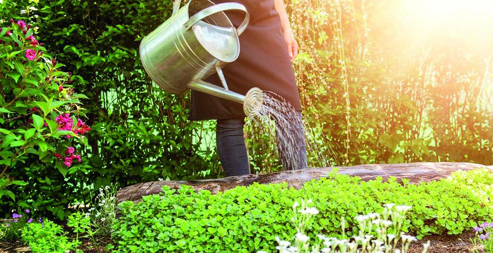 Environnement : Les bons « éco-gestes » à adopter