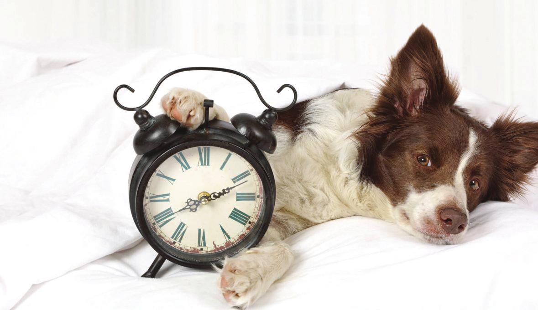 Les animaux et la notion du temps !