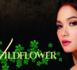 Télénovélas - Wildflower - épisodes 21 à 24