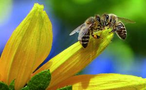 Une charte pour les abeilles