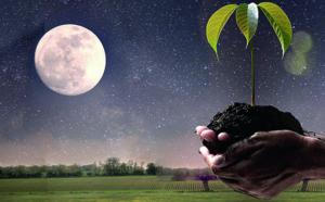 Jardiner avec la lune !