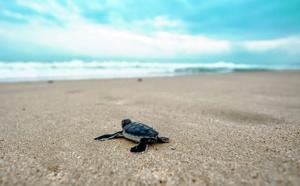 Des plantes pour sauver les tortues