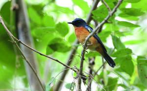 La biodiversité s'enrichit de 10 nouveaux oiseaux