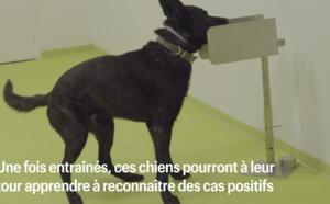 Coronavirus : des chiens formés à détecter le Covid-19