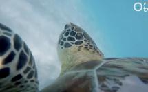 Réhabilitation des plages de ponte des tortues marines