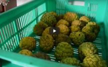 Le Vélo Vert : de la ferme agricole à l'assiette