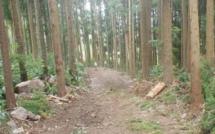 Un meilleur accès à la forêt de Cilaos