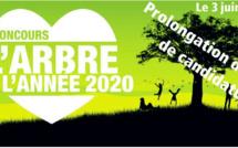 PROLONGATION DES DÉPÔTS DE CANDIDATURES POUR LE CONCOURS ARBRE DE L'ANNÉE