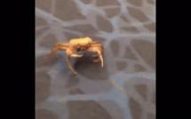 Incroyable ! Des crabes s'échappent d'une valise à Roissy
