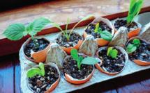 Jardinage : quelques astuces pour vous simplifier la vie!